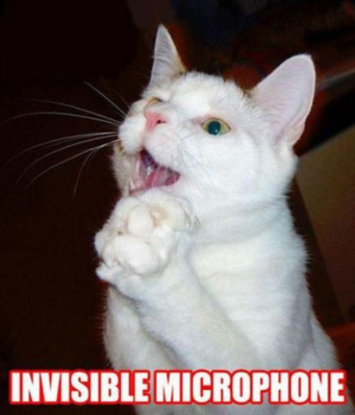 Кошки с невидимыми предметами