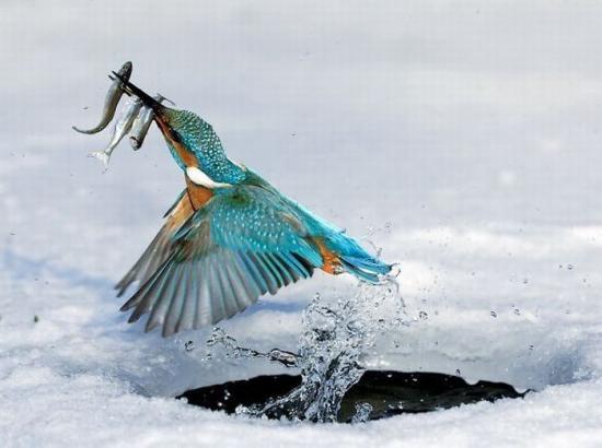 Профи зимней рыбалки